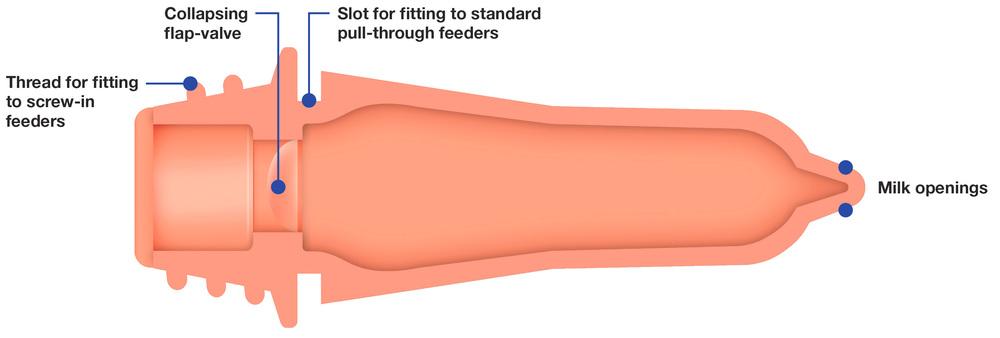 Peach Teat cutaway diagram